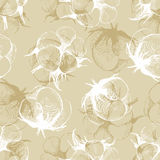 Hand drawn cotton plant seamless Royalty Free Stock Photos
