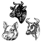 Hand drawn cow and pig heads isolated on white background. Desig Stock Photos
