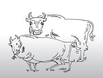 Hand drawn cows. Hand drawn image of cows. it can be used for environmental issues or any food, animal related subjects stock illustration