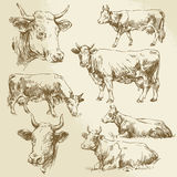Hand drawn cows Stock Photo