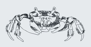 Hand drawn crab Stock Photo