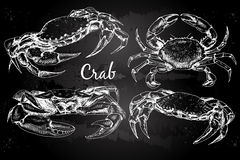 Hand drawn crabs. Vector vintage crab drawing. Hand drawn monochrome seafood illustration on chalkboard. Great for menu, poster or label Stock Photography