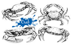 Hand drawn crabs. Vector vintage crab drawing. Hand drawn monochrome seafood illustration. Great for menu, poster or label Stock Image