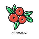 Hand drawn cranberry in doodle style. Vector. Illustration. Sketch Stock Photo
