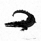 Hand drawn crocodile Royalty Free Stock Image