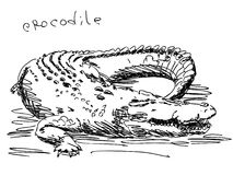 Hand drawn crocodile Stock Photo