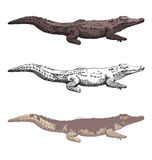 Hand-drawn crocodiles Stock Images