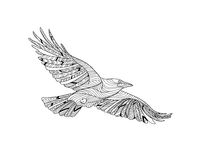 Hand-drawn crow with ethnic pattern. Coloring page - zendala, design for spiritual relaxation for adults, vector. Illustration, isolated on a white background Stock Photo