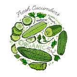 Hand Drawn Cucumber 02 A Royalty Free Stock Images