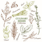 Hand Drawn Culinary Herbs Set Stock Photo