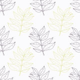 Hand drawn curry leaves and branch outline Royalty Free Stock Photo