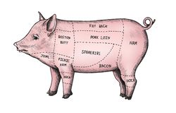 Hand drawn cut of pig stock illustration