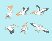 Hand drawn cute cartoon  pelicans in different poses. Vector illustration. Hand drawn cute cartoon  pelicans in different poses. Vector illustration with birds Stock Photos