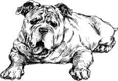 Hand drawn Cute english bulldog Stock Photography