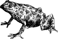 Hand drawn cute frog Royalty Free Stock Images