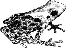 Hand drawn cute frog Stock Photography