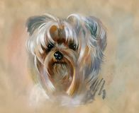 Hand drawn cute yorkshire terrier dog. Hand drawn watercolor cute yorkshire terrier dog Royalty Free Stock Photography