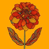 Hand drawn Dahlia flower Stock Images
