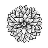 Hand drawn Dahlia. Flower floral engraving vector illustration. Black flower on white Stock Image
