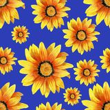 Hand-drawn dahlia flower pattern. Dahlia flower seamless pattern on blue background Royalty Free Stock Photo