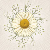 Hand Drawn Daisy Stock Images