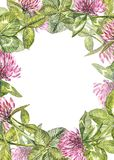 Hand-drawn de bloemillustratie van de waterverf rode klaver Geschilderd botanisch die three-leaved weidegras, op wit wordt geïsol stock fotografie