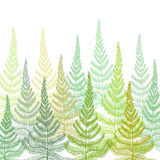 Hand drawn Decorative background with fern ornament. Vector Hand drawn Decorative pattern with fern ornament. Forest fern background Royalty Free Stock Photo