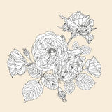 Hand drawn decorative roses Stock Photography