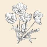 Hand drawn decorative tulips Stock Photo