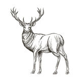 Hand drawn deer Royalty Free Stock Photo