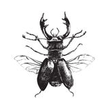 Hand drawn deer beetle Stock Image