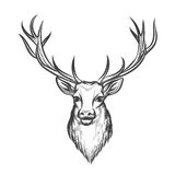 Hand drawn deer head Royalty Free Stock Photography