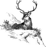 Hand Drawn Deer Stock Images