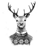 Hand drawn deer in kneated sweater Royalty Free Stock Photography