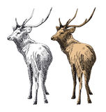 Hand-drawn deer Royalty Free Stock Image
