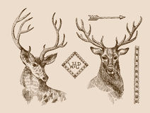 Hand drawn deer. Hand drawn vector illustration sketch of deer.  Boho style. Use for scrapbook, tissue, textile, cloth, fabric, web Stock Photos