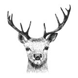 Hand drawn deer Royalty Free Stock Photography