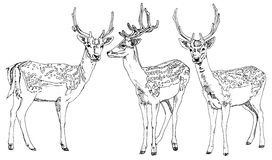Hand drawn deers. Royalty Free Stock Photos