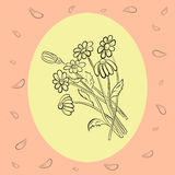 Hand Drawn Delicate Chamomile Royalty Free Stock Photography