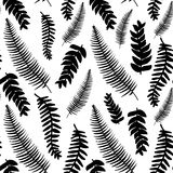 Hand drawn delicate decorative vintage leaves in black and white Royalty Free Stock Images