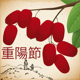 Hand Drawn Design and Dogwood for Double Yang Festival, Vector Illustration Stock Photography