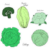 Hand drawn different kind of cabbage Royalty Free Stock Photo