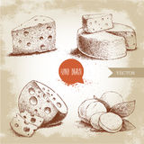 Hand drawn different type of cheese set. Edam, mozzarella cheese with basil leafs, round cheese head, triangle of cheese. Vector organic food illustration Royalty Free Stock Photography