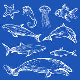 Hand drawn different types of sea animals. On blue background Royalty Free Stock Photography