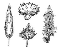 Hand drawn different types of tree. Hand drawn black and white different types of tree Stock Images