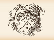 Hand drawn dog face. Illustration sketch Royalty Free Stock Photo