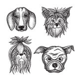 Hand Drawn Dog Faces Set Stock Photo