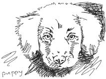 Hand drawn dog. Hand drawn puppy dog vector Royalty Free Stock Photography