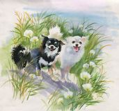 Hand drawn dogs on the nature, watercolor illustration. Hand drawn dogs on the nature, watercolor illustration royalty free illustration