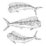 Hand drawn Dolphinfish Stock Photo